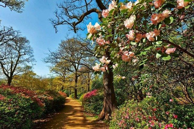 isabella-plantation-things-to-do-kingston.jpg