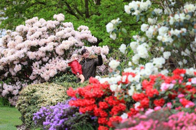Spring Blossom at RHS Garden Wisley, Surrey - 29th April 2018
