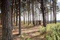 Forest Glassshouse-48.jpg