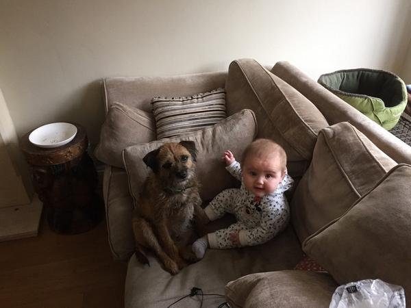 Find Toby the Border Terrier