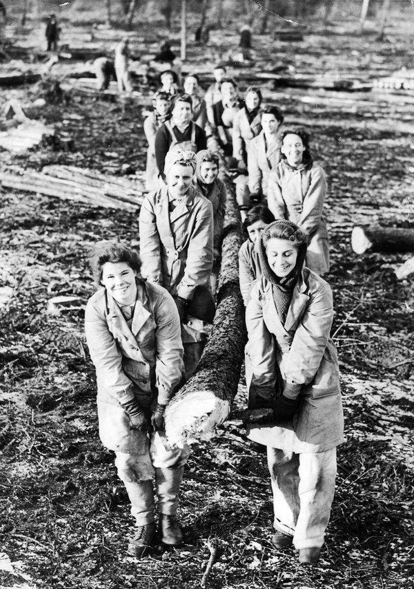 14. Women's Timber Corps 1942 Culford near Bury St. Edmonds, Suffolk.jpg