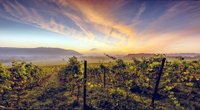 denbies-wine-estate.jpg