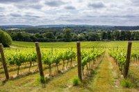 the-albury-organic-vineyard.jpg