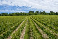 greyfriar-vineyard-surrey-wine.jpg