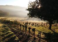gostone-vineyards-surrey.png