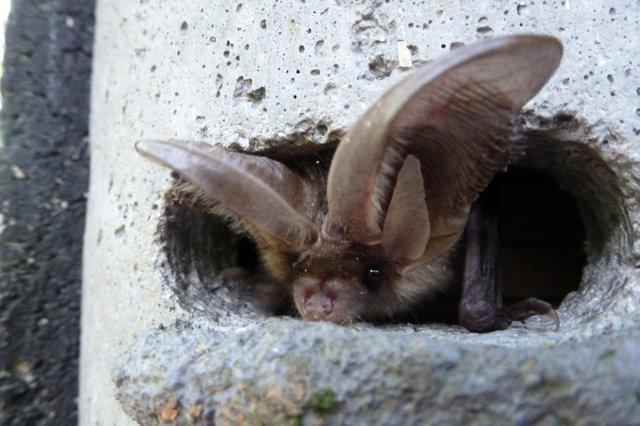 RHS Garden Wisley  Bat Walk cr RHS.jpg