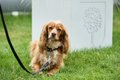 Dogs_001