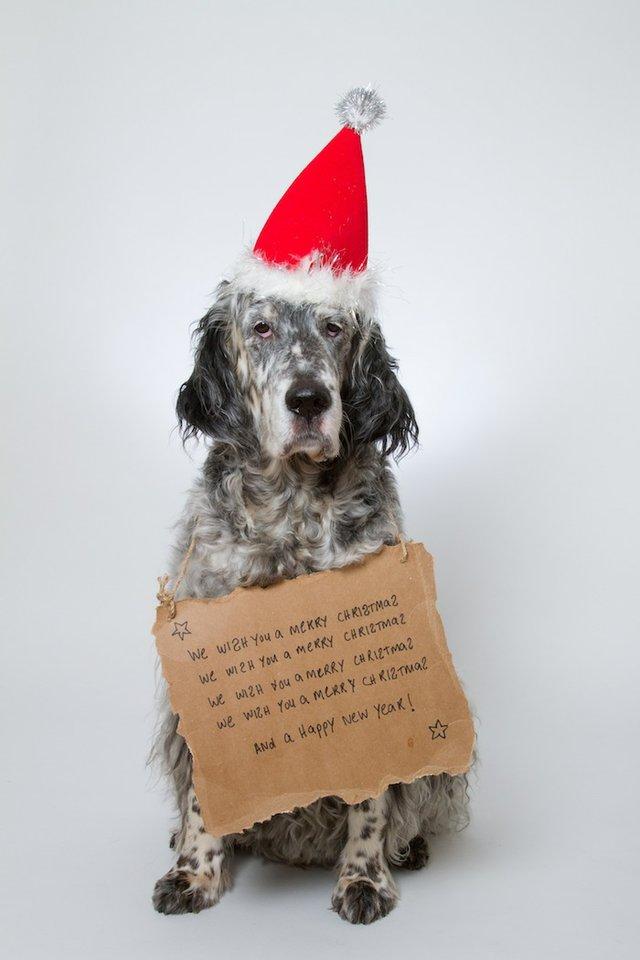 christmasy dog
