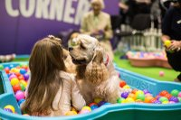 Discover Dogs 2018