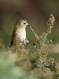 Intro to wildlife photography.JPG