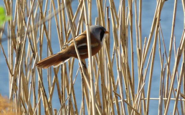 Winter Bird Watching Walk.JPG