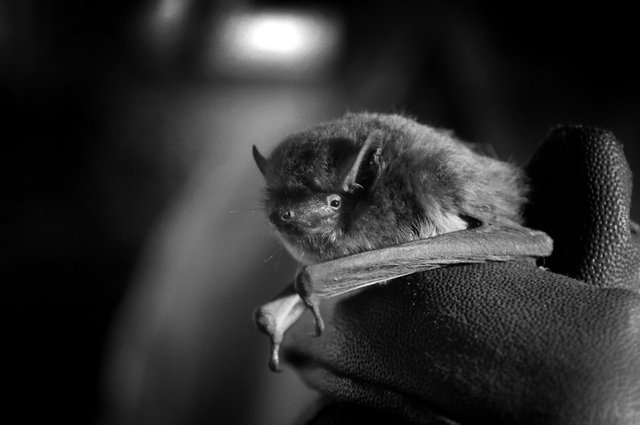 RHS Garden Wisley May events - Bat Walk cr GREENER.jpg