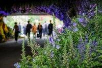 rhs online flower show.jpg