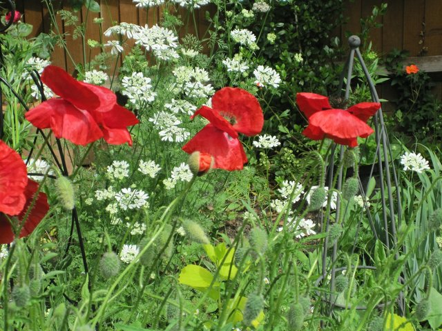gardening March