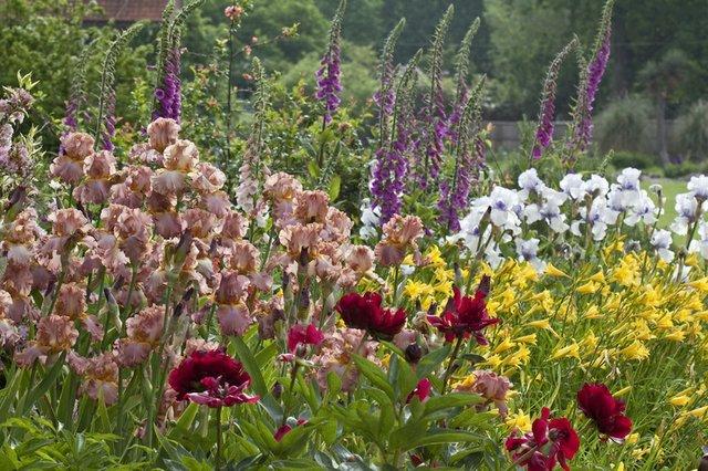 RHS Garden Wisley - All about Plants cr RHS Carol Sheppard.jpg
