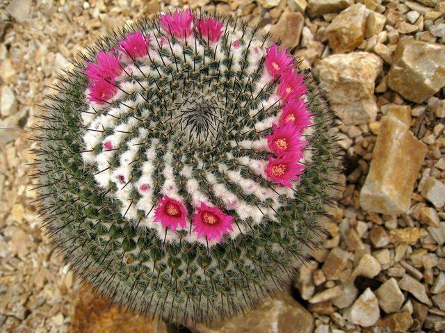RHS Garden Wisley - Mammillaria Society Day cr RHS_Liz Blyth.jpg