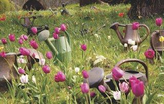 tulip meadow.png