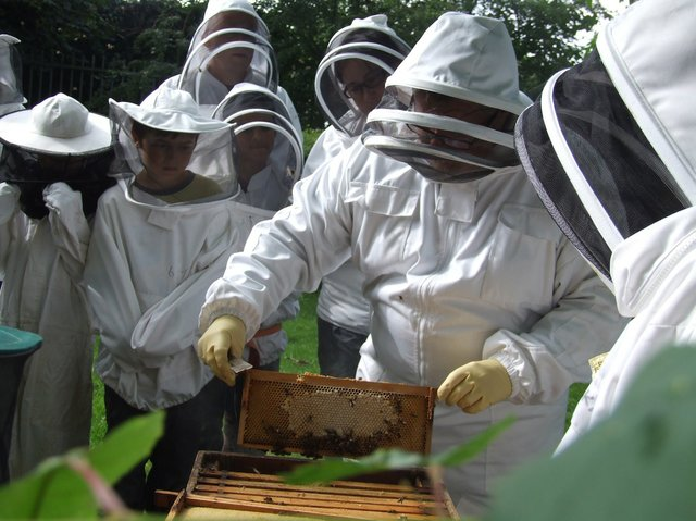cp bees small.jpg