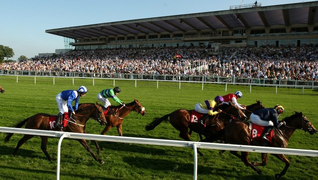 horse sandown flat racing 02.jpg