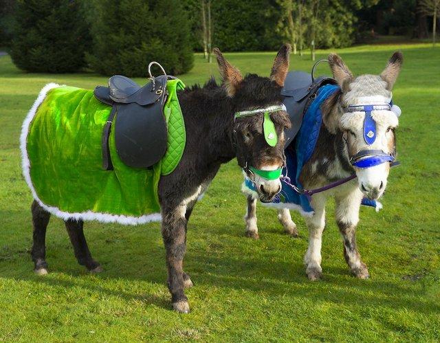 Donkey photo for Donkey Derby 13th June 2015 (1280x998).jpg