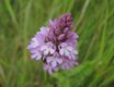wildflower a.jpg