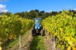 albury vineyard.jpg