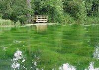 silent pool.jpeg