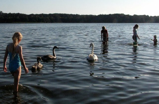 frensham swim.jpeg