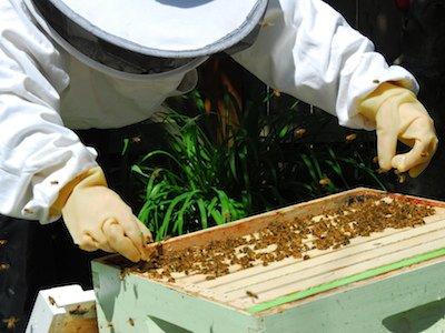 beekeeping.jpeg