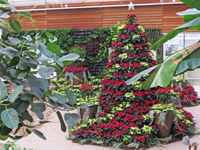 RHS Garden Wisley December - Christmas Display in the Glasshouse cr RHS.jpg