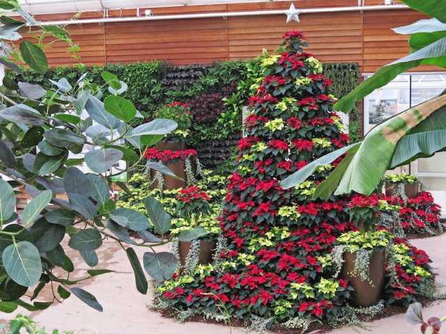 RHS Garden Wisley December - Christmas Display in the Glasshouse cr RHS.jpg