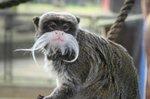battersea park tamarin monkey.jpg
