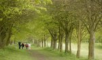farnham park.jpg