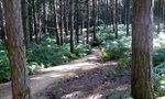 swinley forest.jpg