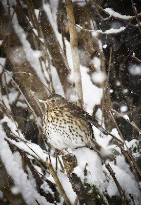 bird in winter surrey.jpg