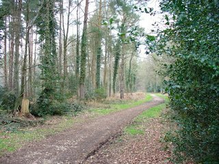 alice holt forest track.jpg