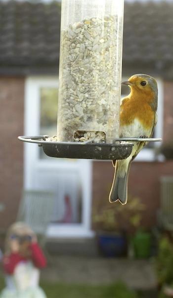 birdwatch web side ben hall.jpeg