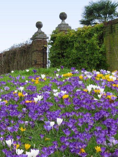 RHS Garden Wisley March Spring Plant Fair cr RHS.JPG