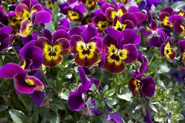 flowers purple.jpg