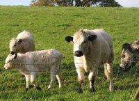 Mellow Farm.jpg