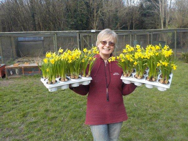 Sue Daffodils copyweb.jpeg