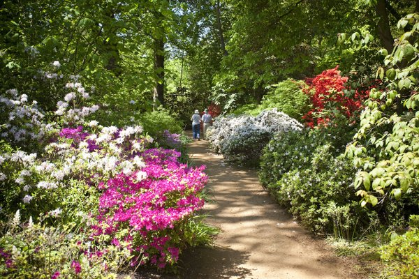 Gorgeous Savill Gardens