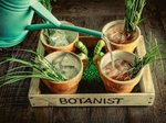 Botanist watering can.jpg