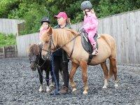 poynters ponies.jpg