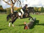 chessington equestrian 2.jpg