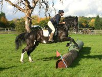 chessington equestrian 2.jpg