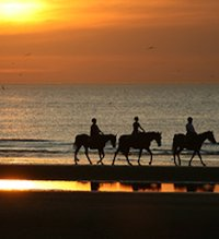horse_riding_surrey_beach_ride_home_page.jpg