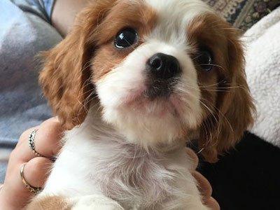 Puppy-2nd-place.jpg