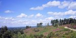 marley common.jpg