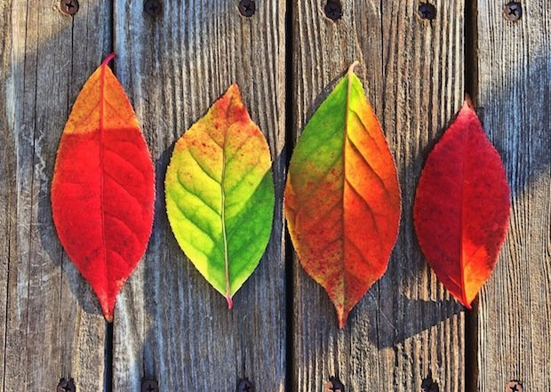 leaves-fall-colors-rainbow.jpg